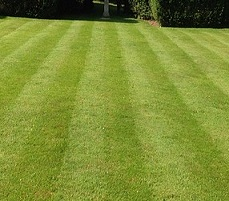 lawn with a striped finish